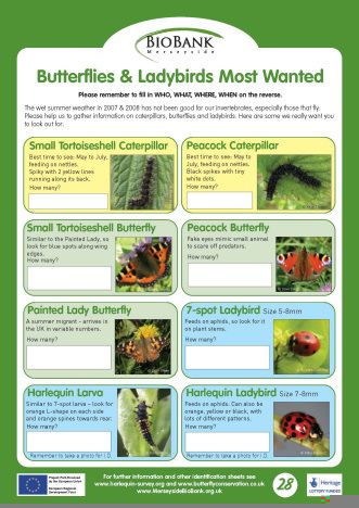 School pack Invertebrates most wanted.