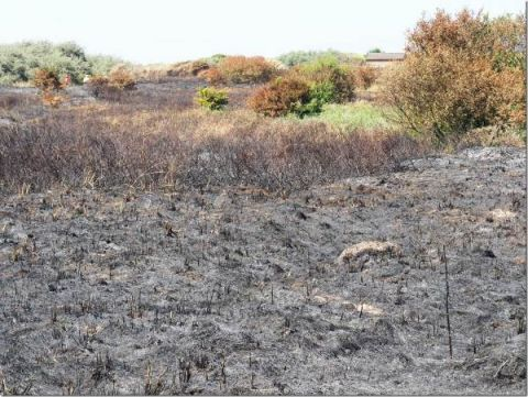 Coastal fire damage (Dr Phil Smith)