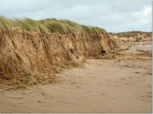 Dune erosion at Hightown after Storm Ciara (Photo: Dr Phil Smith)