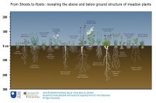 From Shoots to Roots: revealing the above and below ground meadow plants