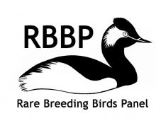 Rare Breeding Birds Panel