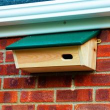 RSPB Swift Nest Box