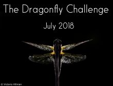 Dragon Hunter Challenge