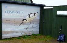 Avocet at Marshside (Hugh Harris)
